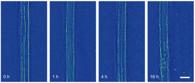 软固体电解质材料可有效抑制锂电池阳极上的枝晶生长
