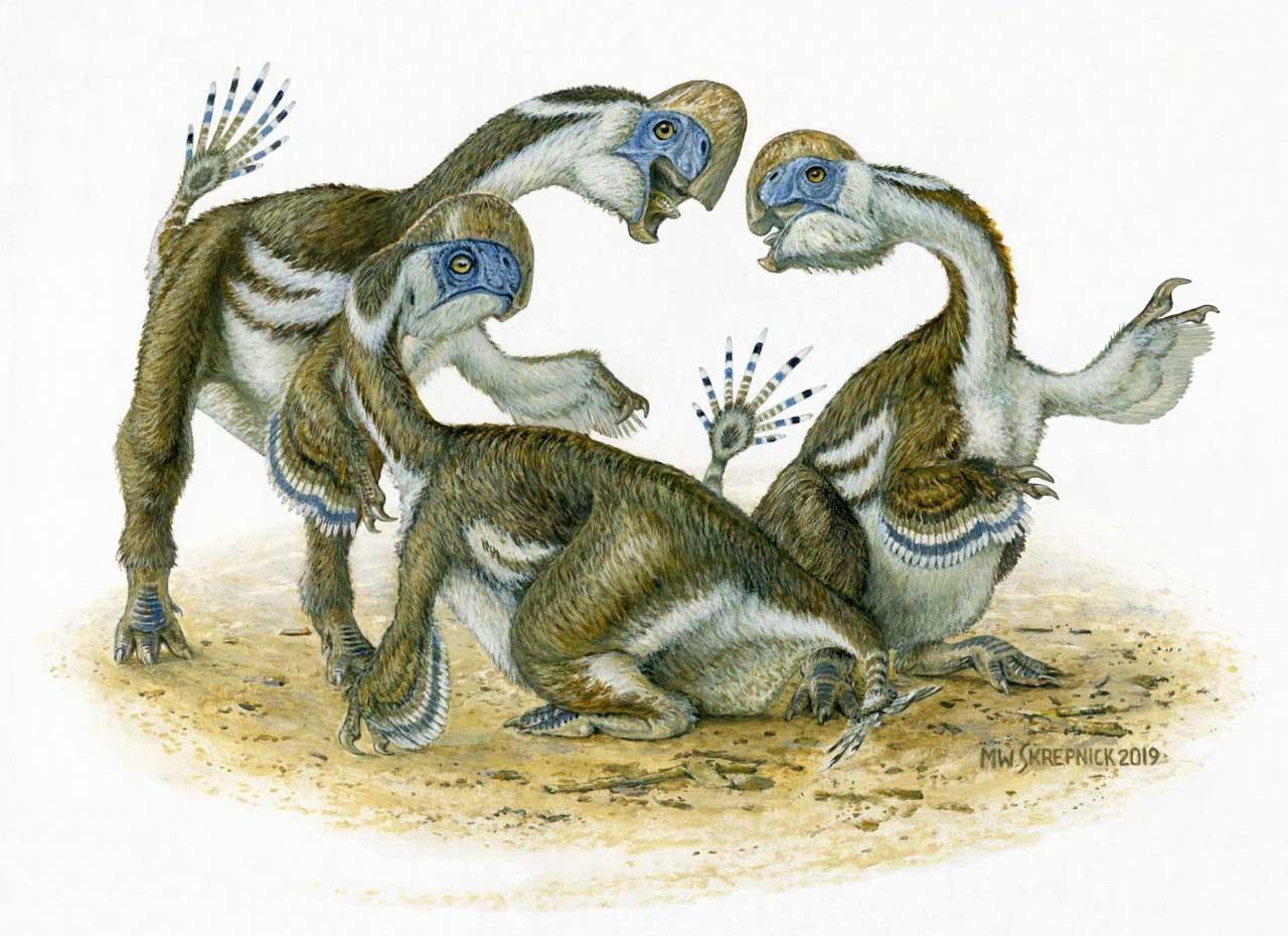 <b>一种新的无牙鹦鹉类恐龙物种被发现</b>