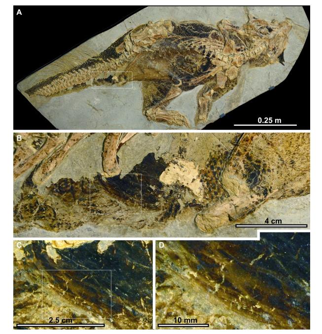 <b>开口内的人体器官没有在化石中储存出来</b>