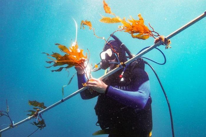 kelp-elevator_web-768x512.jpg