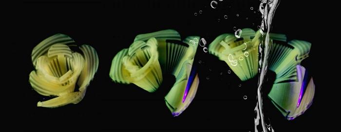 研究人员演示通过刻印凹槽来控制面食在水煮时的形状变化