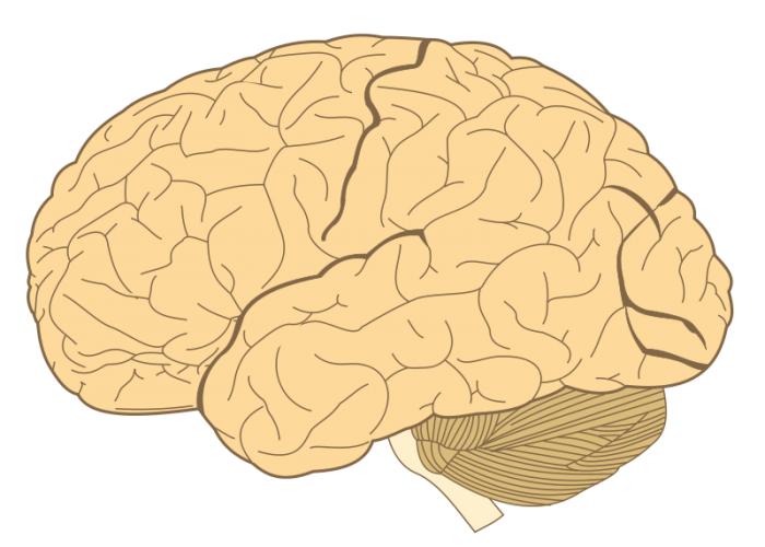 与压力和抑郁症有关的脑蛋白的新发现可以为新型药物的研发铺路