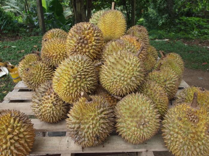 1600px-Durian.jpg