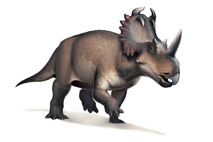 <b>科学家首次在恐龙身上诊断出晚期骨癌</b>