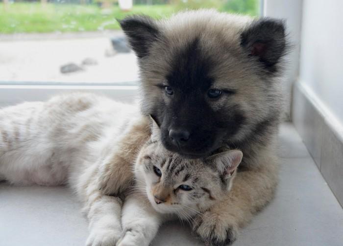 dog-cat-2904616_960_720.jpg