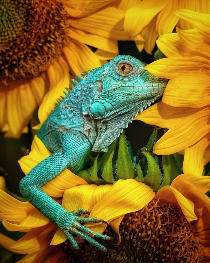iguana-by-jjnmatt-indonesia.jpg