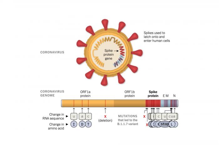 virus-variant-1608579875269-superJumbo.png