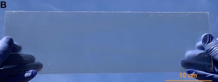 transparent-wood.jpg