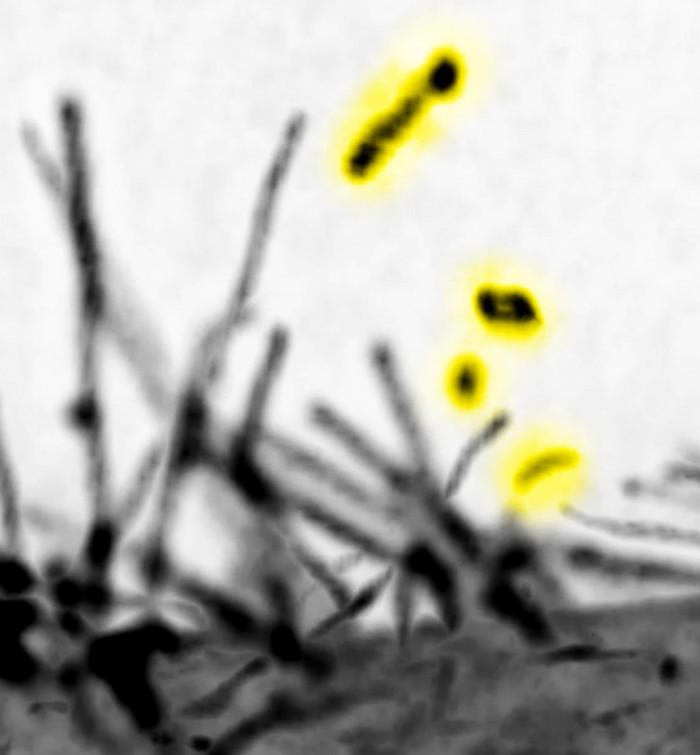 Filopodia-Lattice-Light-Sheet-Microscopic-Images.jpg