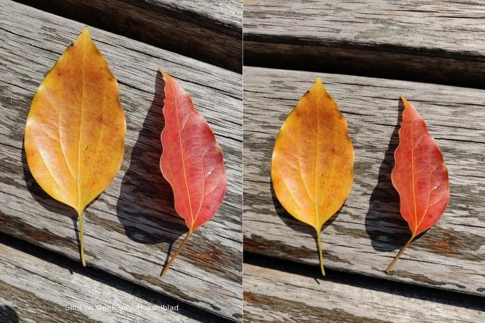 IMG_20210405_144925 Leaves.jpg
