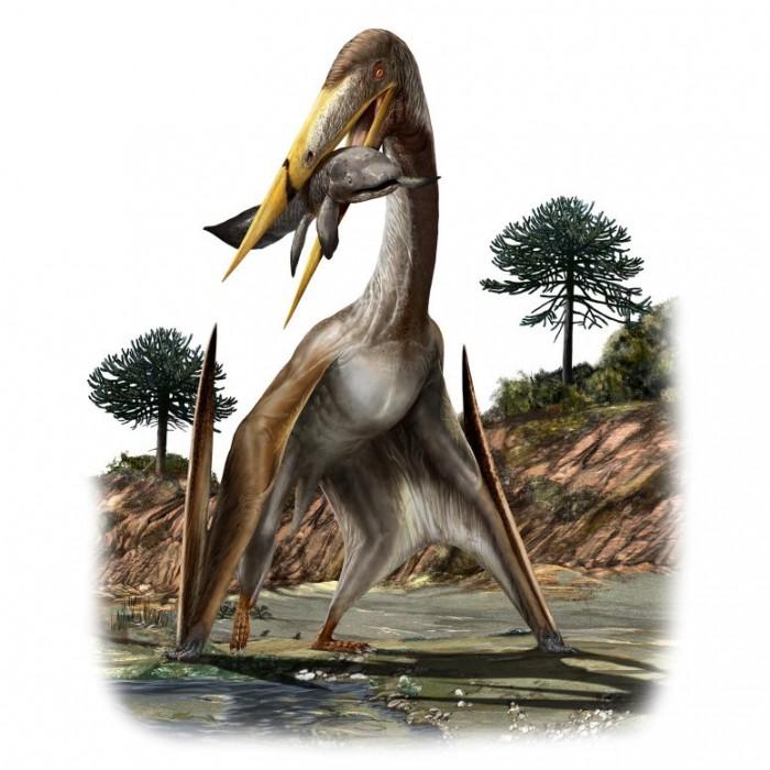 Alanqa-saharica-Pterosaur-777x777.jpg