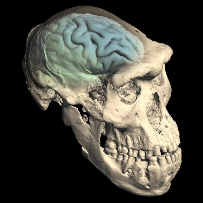 Skull-of-Early-Homo-From-Dmanisi-Georgia-777x777.jpg