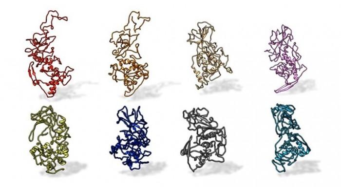 N-Protein.jpg