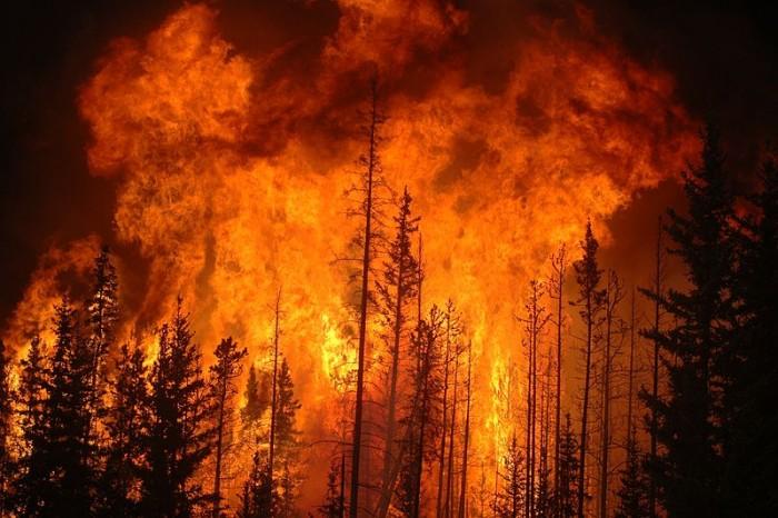 800px-Fire-Forest.jpg
