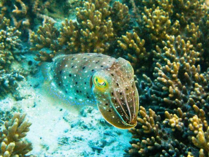 Cuttlefish-777x583.jpg