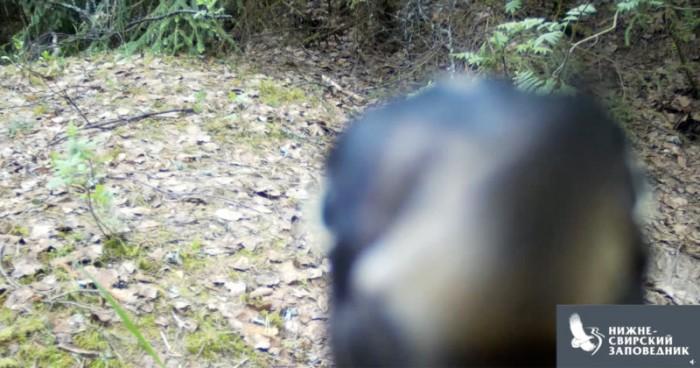 Watch-a-Woodpecker-Methodically-Demolish-a-Wildlife-Camera-800x420.jpg
