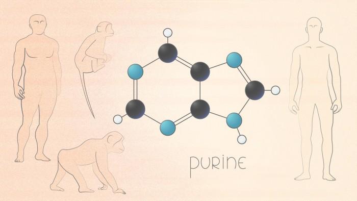 Purine-Modern-Humans-Neanderthals.jpg