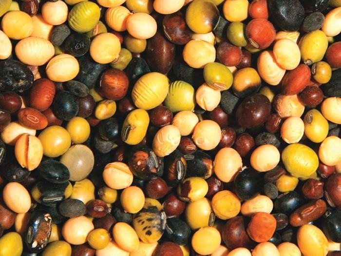 Array-of-Soybeans.jpg
