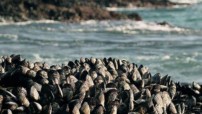 shellfish-glue-1280x720.jpg