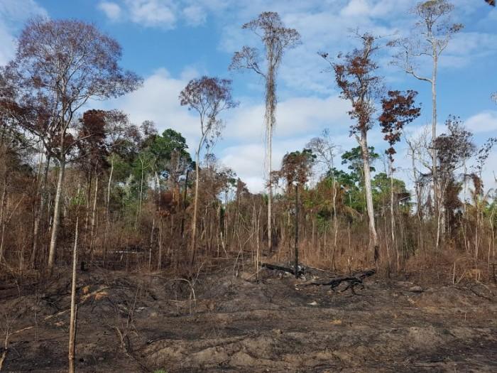 Burned-Amazonian-Forest-777x583.jpg