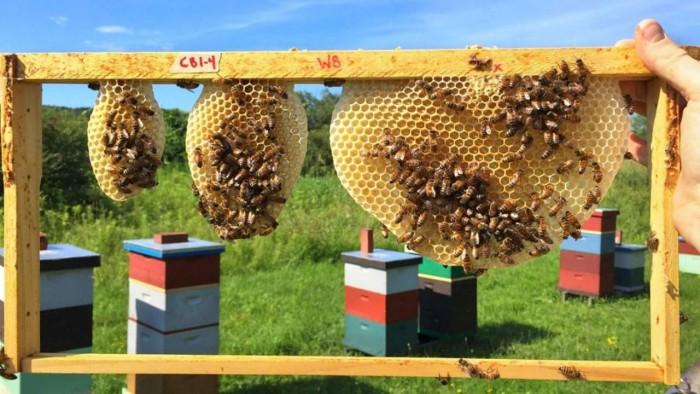 bee-honeycomb-1280x720.jpg