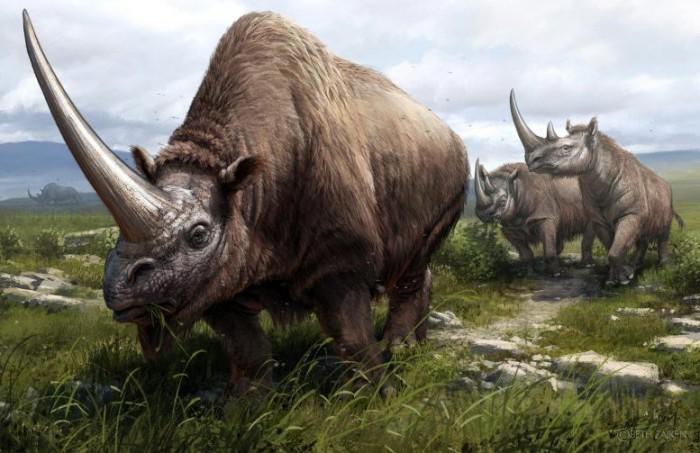 Three-Extinct-Rhinoceros-Species-777x503.jpg