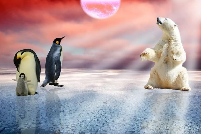 polar-bear-penguins-arctic-polar.jpg