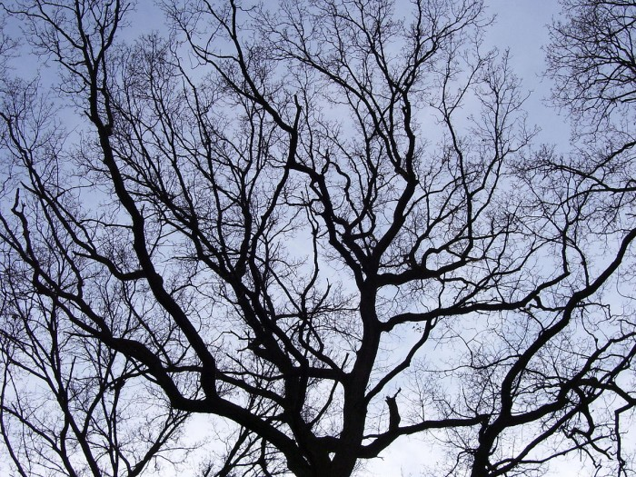 Branches_of_a_tree.JPG