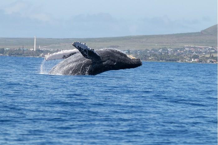 whales-4858366_1280.jpg
