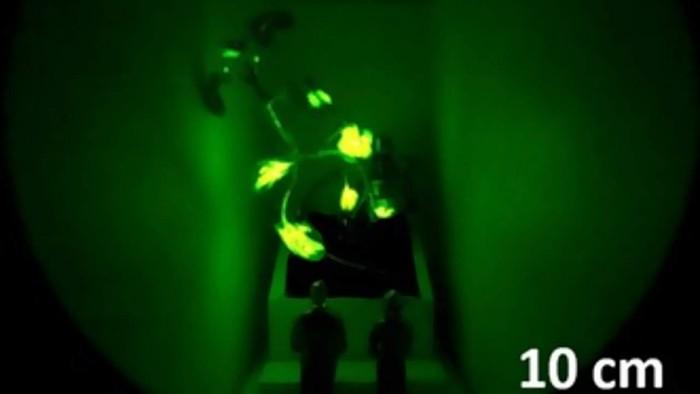 MIT-glowing-plant-second-gen-lighting-1280x720.jpg