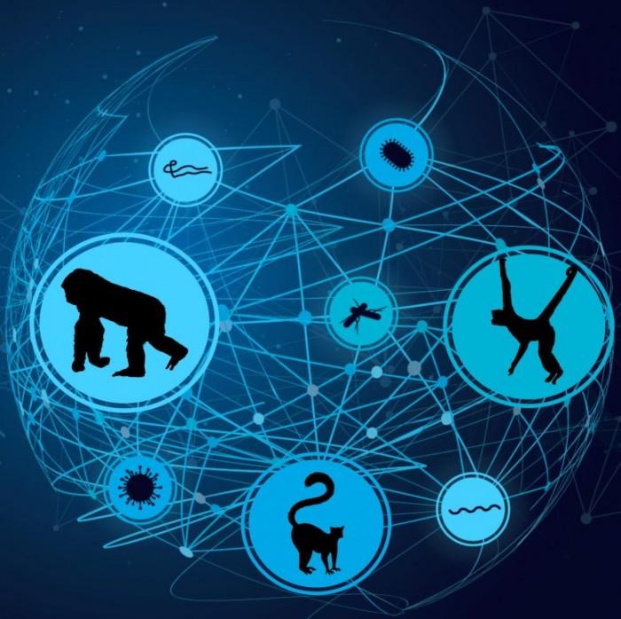 Host-Parasite-Network-777x775.jpg