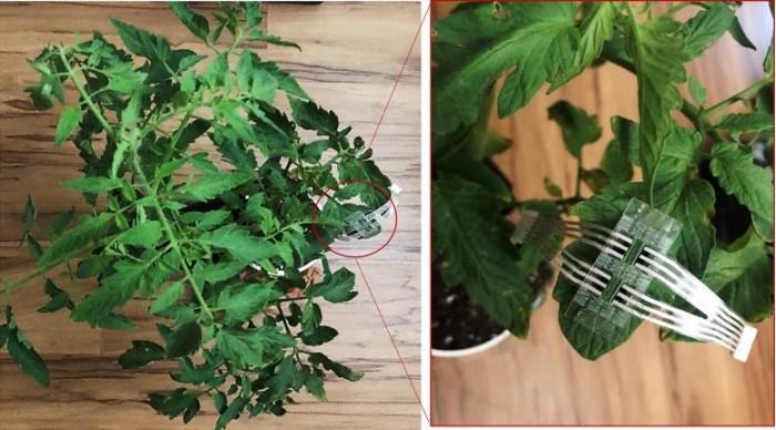 Patch-Monitors-Crop-Plants-777x431.jpg