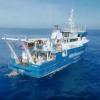 澳大利亚科学家在浅水区发现罕见的奇异深海生物
