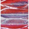 研究人员发现实验性药物组合可逆转老鼠的骨关节炎