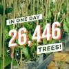 Ecosia发起网络搜索公益活动 向澳大利亚捐助26446棵树