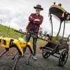 """前""""流言终结者""""将波士顿动力Spot机器人改造成电动车夫"""