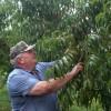 美农场主指控拜耳等除草剂污染果园获赔2.65亿美元