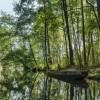 特斯拉获德国法院批准继续砍林建厂