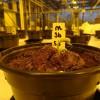人类尿液或可以作为在火星上种植植物的理想肥料