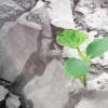 废弃木材能让回收混凝土的强度变得更强