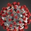 民调显示:美国人更担心流感 而不是新冠病毒