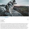 """曾在《权游》第一集""""扮演""""冰原狼的狗狗奥丁患癌去世"""