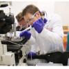 研究人员在实验室试验中冷却脑震荡细胞  使其保持健康功能