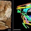 亚洲最古老沙鸡化石揭示600万年前青藏高原生态