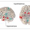 """耶鲁大学新研究发现了造成压力感的大脑""""网络"""""""