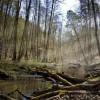 研究:因气候变化 地球森林正在变得更矮、更稚嫩