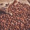 改善肠道健康、预防疾病... 新研究发现喝咖啡益处多多