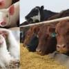 人造肉科学拯救地球:实验室培育肉类你敢吃吗?