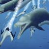 科学家发现体型庞大的灭绝海豚 是一种具有鲸鱼特征的顶级掠食者