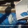 以色列发电站惊现蓝色水母 可能干扰发电引起供电中断